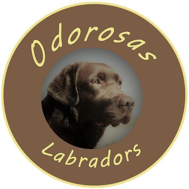 Odorosas Labradors